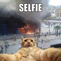 Backchod Billi Selfie Troll